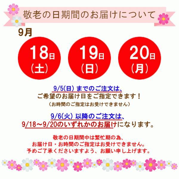 敬老の日花鉢 敬老ポット「いつもありがとう」 敬老の日 誕生日 お祝い 花 ギフト プレゼント 花鉢 鉢植え ケイトウ けいとう 鶏頭 送料無料|f-hanasyou|02