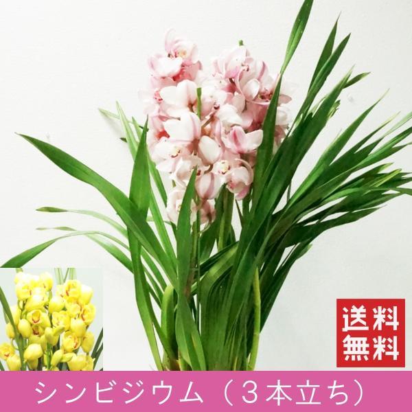 「シンビジウム 3本立ち」 誕生日 お祝い 開店・開業祝い お歳暮 春のギフト 花 ラン 洋蘭 花鉢 ピンク イエロー 送料無料 f-hanasyou