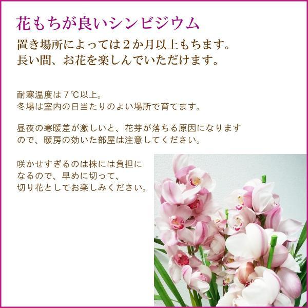 「シンビジウム 3本立ち」 誕生日 お祝い 開店・開業祝い お歳暮 春のギフト 花 ラン 洋蘭 花鉢 ピンク イエロー 送料無料 f-hanasyou 03
