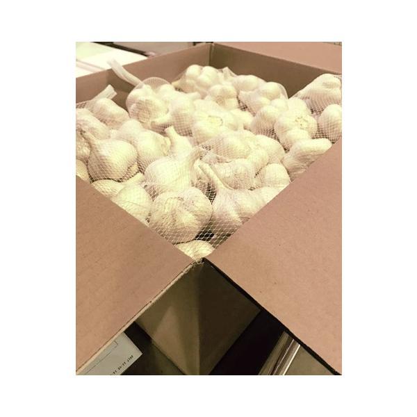 送料無料! 業務用 青森産新物にんにく A級品 Mサイズ 10kg 国産ニンニク 送料込|f-oishii|07