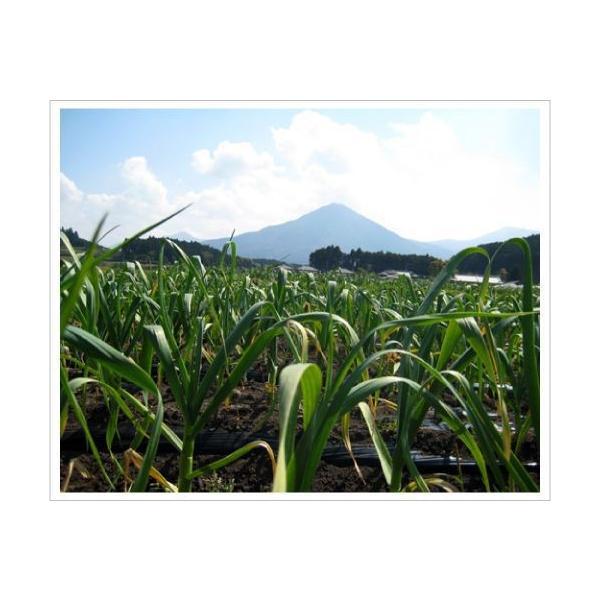 送料無料!業務用 九州産乾燥にんにくチップ 1kg 国産ニンニク 送料込|f-oishii|02