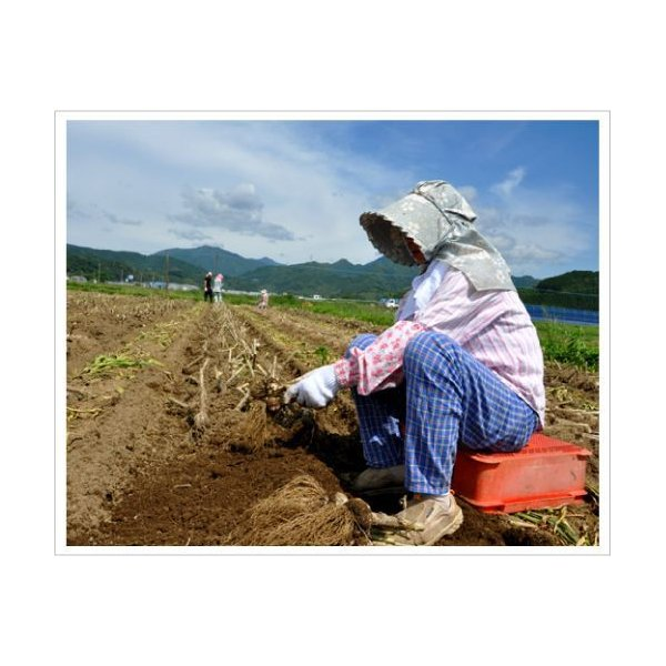 送料無料!業務用 九州産乾燥にんにくチップ 10kg 国産ニンニク 送料込|f-oishii|03