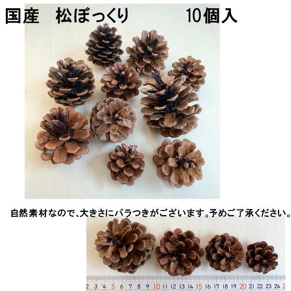 松かさ アソート 3〜6cm(大袋50個入)24207-000 松ぼっくり クリスマス 天然素材|familiamia|02