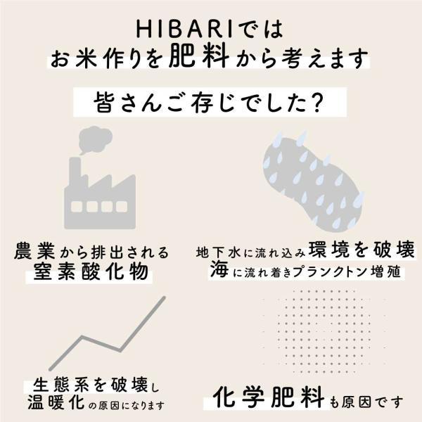 米5kg お米 新米 コシヒカリ 玄米 白米 選べる 平成30年産 送料無料 新潟県産 タイムセール|farmex|02