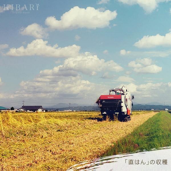 ギフト用  新潟県産米 コシヒカリ お米 5kg×2袋 10kg 米 玄米 白米 選べる 平成30年産 送料無料 タイムセール ギフト|farmex|17