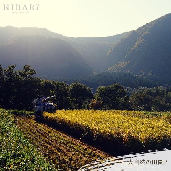 コシヒカリ 5kg 米 お米 玄米 平成30年産 送料無料 新潟県産 タイムセール スペシャルセレクト|farmex|11
