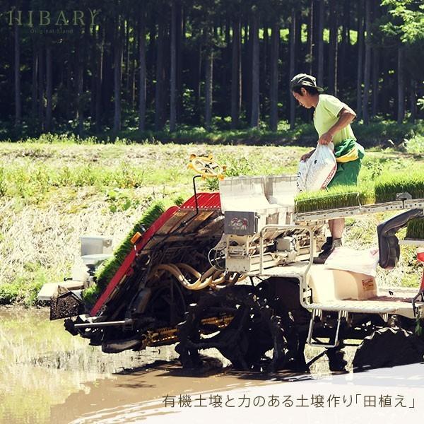 コシヒカリ 5kg 米 お米 玄米 平成30年産 送料無料 新潟県産 タイムセール スペシャルセレクト|farmex|12
