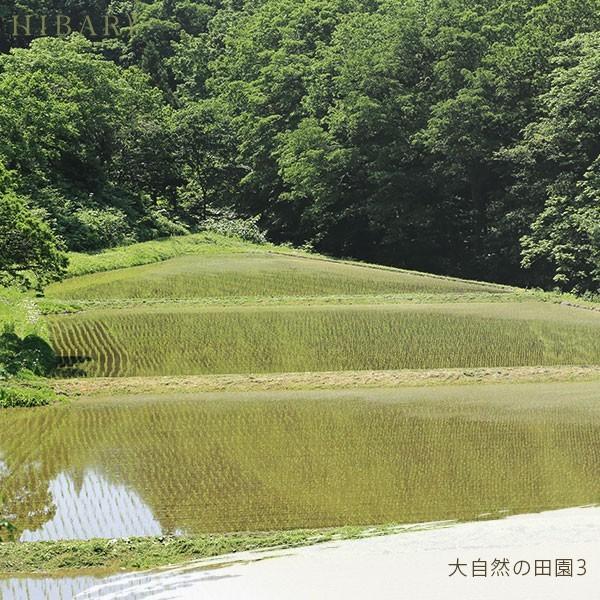 コシヒカリ 5kg 米 お米 玄米 平成30年産 送料無料 新潟県産 タイムセール スペシャルセレクト|farmex|13
