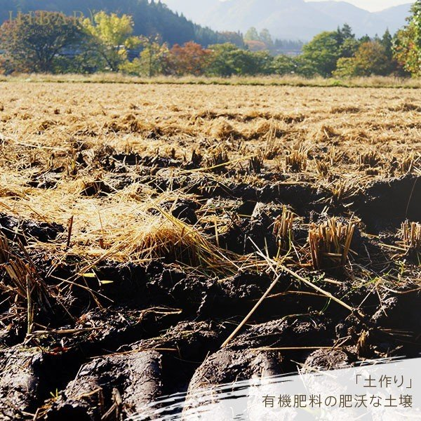 コシヒカリ 5kg 米 お米 玄米 平成30年産 送料無料 新潟県産 タイムセール スペシャルセレクト|farmex|15