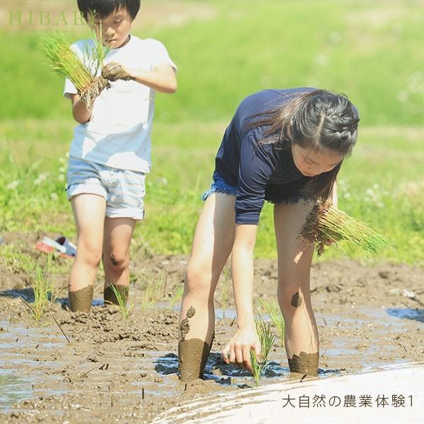 コシヒカリ 5kg 米 お米 玄米 平成30年産 送料無料 新潟県産 タイムセール スペシャルセレクト|farmex|16