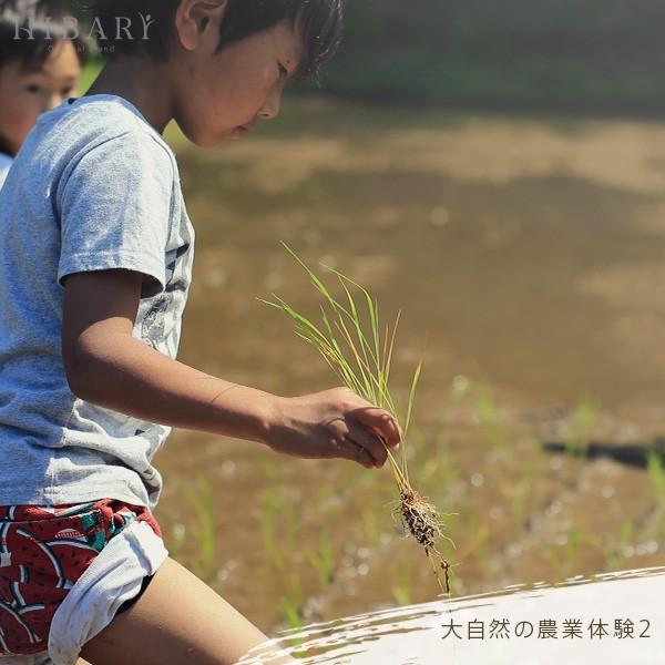 コシヒカリ 5kg 米 お米 玄米 平成30年産 送料無料 新潟県産 タイムセール スペシャルセレクト|farmex|17