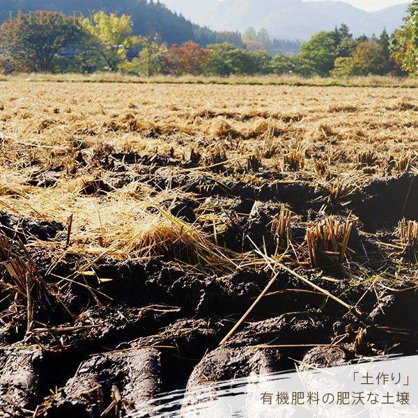 米 お試し新潟県産こしひかりスペシャルセレクトHIBARI お米 30年産  こしひかり 米 産地限定 900g 選べる 白米 玄米 産地直送 farmex 17