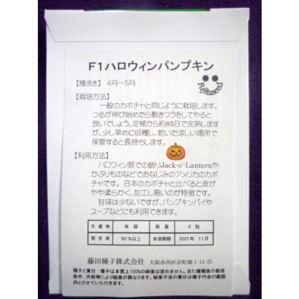 ★種子★ ハロウィン パンプキン カボチャ 藤田種子 20.11 (ゆうパケット便可能) farmmikawa 02