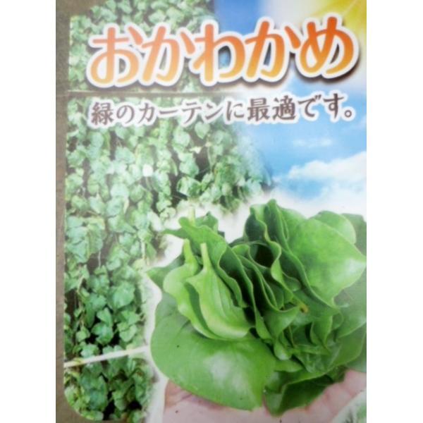 ★野菜苗★おかわかめ★ 雲南百薬 1鉢|farmmikawa