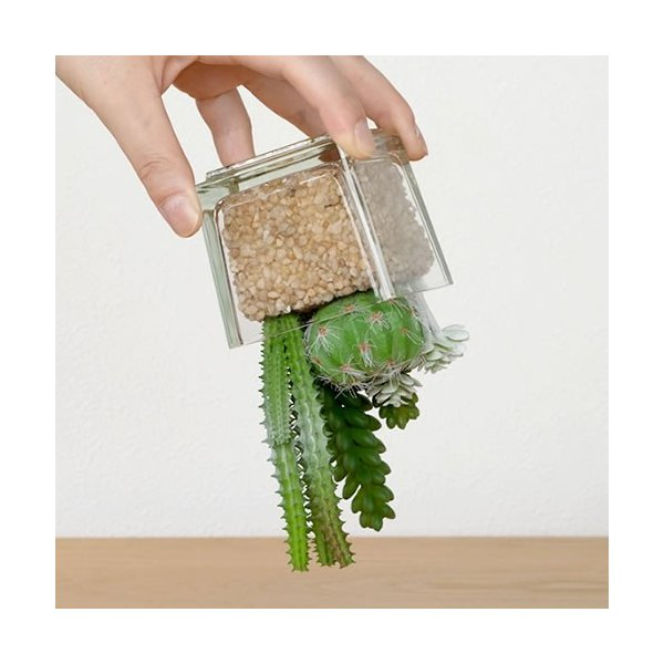 アーティフィシャルグリーン フェイクグリーン イミテーショングリーン 人工観葉植物 CT触媒 抗菌 消臭 多肉植物 サキュレントリフレリウム|favoritestyle|04