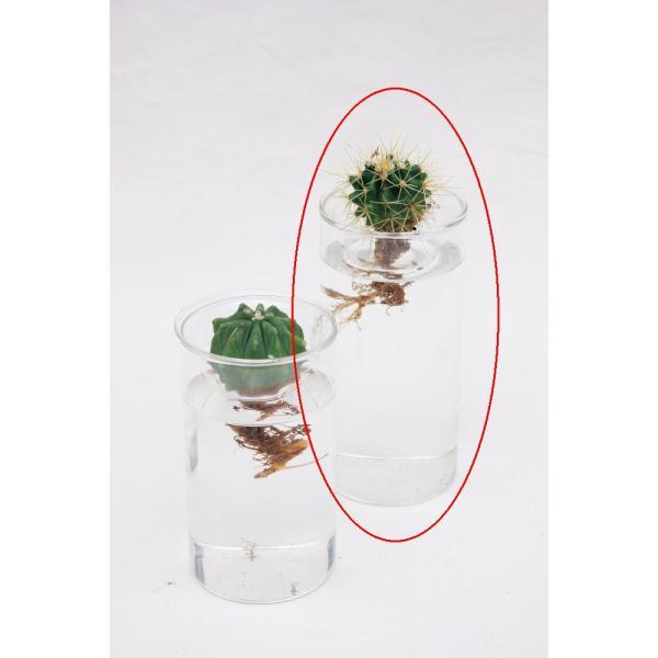 RoomClip商品情報 - BULB VASE LONG  球根用フラワーベース  水栽培  球根