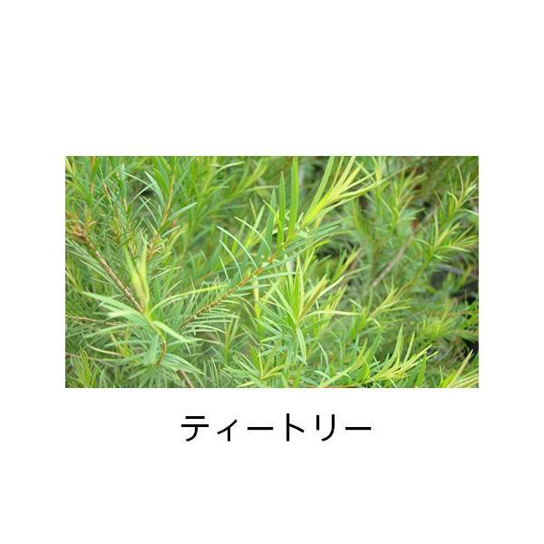 精油スターターbox<オレンジ&ティートリー> firstflight 06