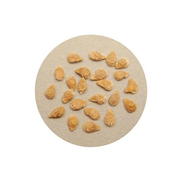 アズワン 野菜の種(苗床付)ミニトマト 1箱 [61-6010-99]