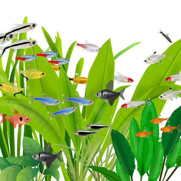 |(熱帯魚)ミックス カラシン 種類おまかせ 15匹