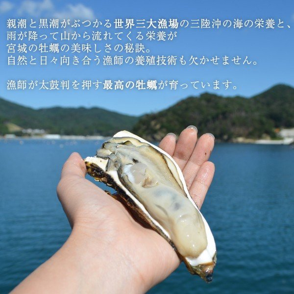 【生食用】牡蠣まさむね500g デッカイのだけギュッと詰めといたよ!/さっぱりした味わい!/石巻牧浜 漁師直送|fishermanjapan|02
