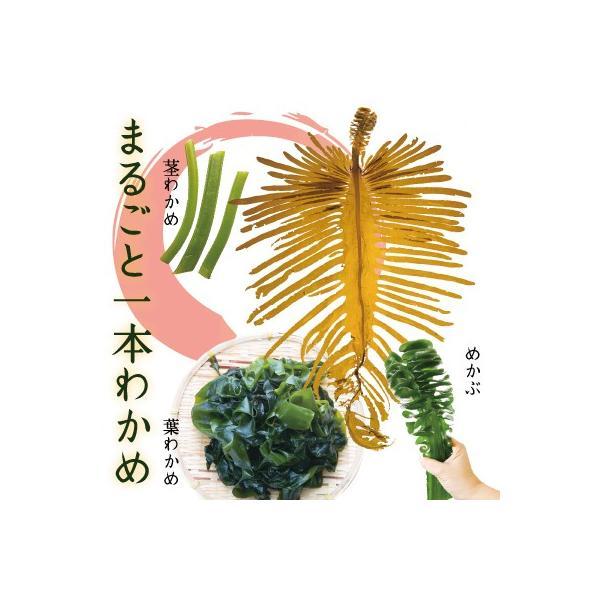 【生ワカメ】 三陸十三浜 丸ごといっぽん生わかめ|fishermanjapan