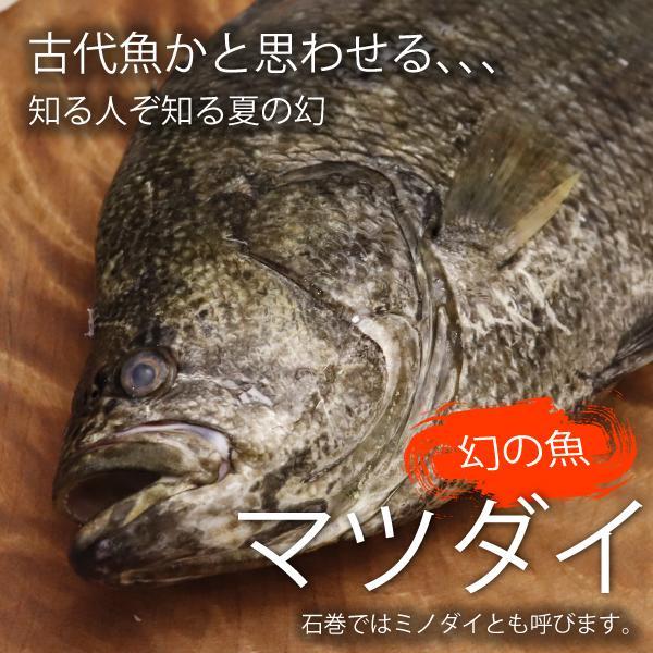 お届けは水揚げ次第!幻の魚マツダイ