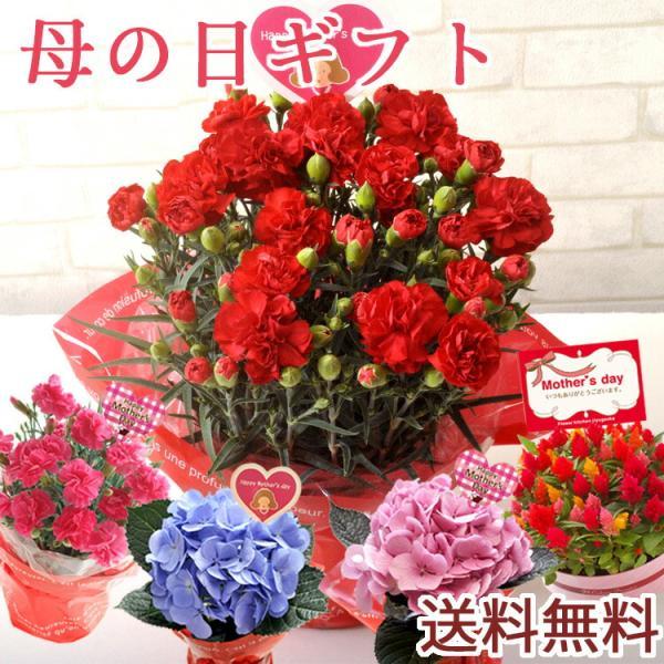 早割実施中 2018母の日ギフト カーネーション花鉢 たっぷり5号鉢 鉢植え フラワーキッチン FKHH|fkjiyugaoka