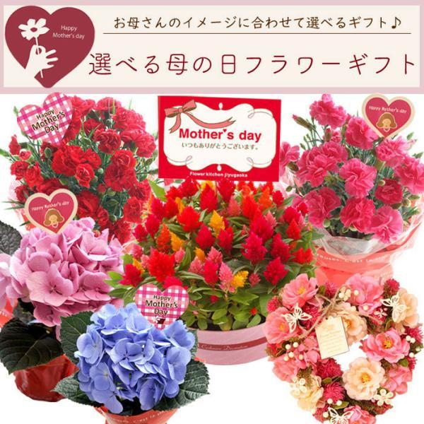 早割実施中 2018母の日ギフト カーネーション花鉢 たっぷり5号鉢 鉢植え フラワーキッチン FKHH|fkjiyugaoka|02