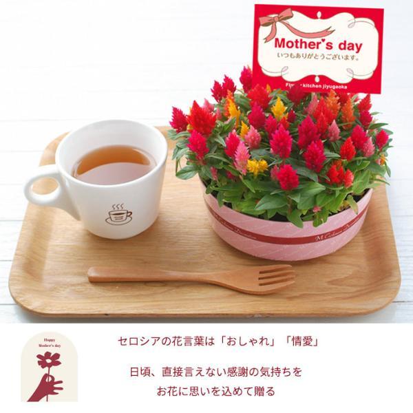 早割実施中 2018母の日ギフト カーネーション花鉢 たっぷり5号鉢 鉢植え フラワーキッチン FKHH|fkjiyugaoka|11