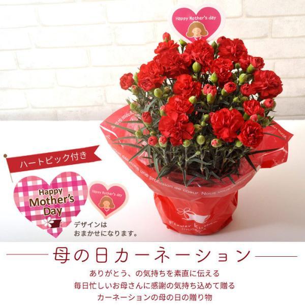 早割実施中 2018母の日ギフト カーネーション花鉢 たっぷり5号鉢 鉢植え フラワーキッチン FKHH|fkjiyugaoka|04