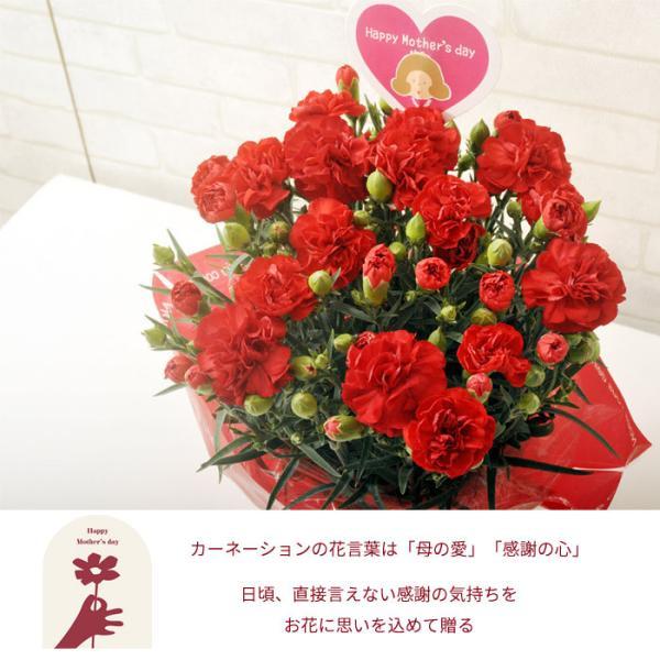 早割実施中 2018母の日ギフト カーネーション花鉢 たっぷり5号鉢 鉢植え フラワーキッチン FKHH|fkjiyugaoka|05