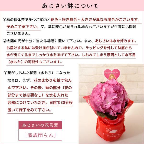 早割実施中 2018母の日ギフト カーネーション花鉢 たっぷり5号鉢 鉢植え フラワーキッチン FKHH|fkjiyugaoka|09