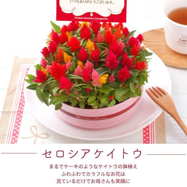 早割実施中 2018母の日ギフト カーネーション花鉢 たっぷり5号鉢 鉢植え フラワーキッチン FKHH|fkjiyugaoka|10