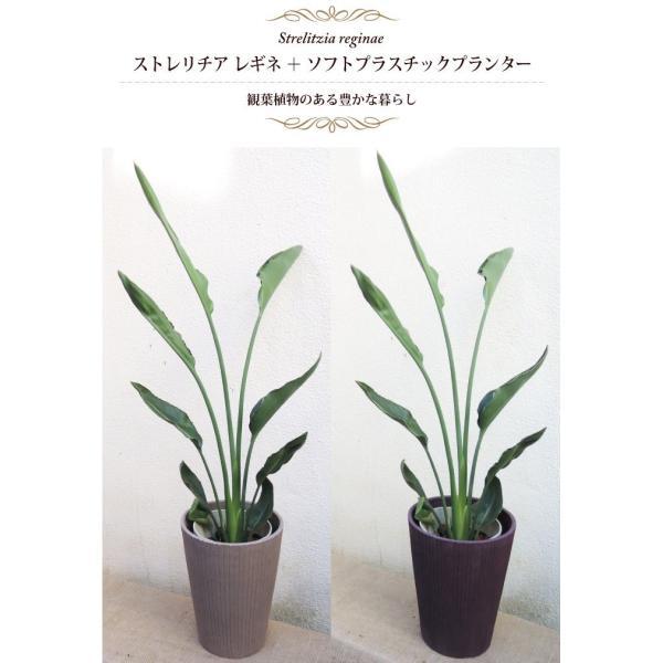 ストレリチア レギネ ソフトプラスチックプランター 選べる2カラー ベージュ/パープル|fkjiyugaoka|02