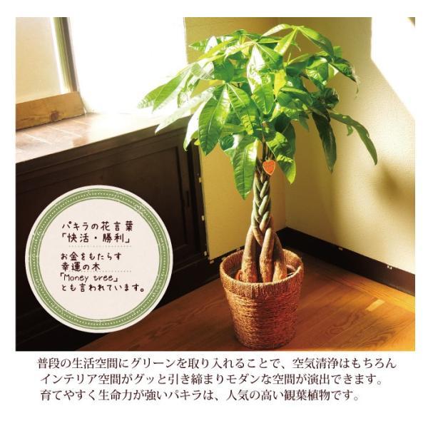 パキラ 観葉植物 パキラ の鉢植えM 7号鉢 即日発送のグリーン ギフト 引っ越し祝い 新築祝い お祝い|fkjiyugaoka|04
