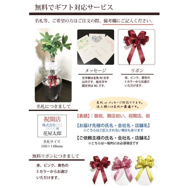 パキラ 観葉植物 パキラ の鉢植えM 7号鉢 即日発送のグリーン ギフト 引っ越し祝い 新築祝い お祝い fkjiyugaoka 06