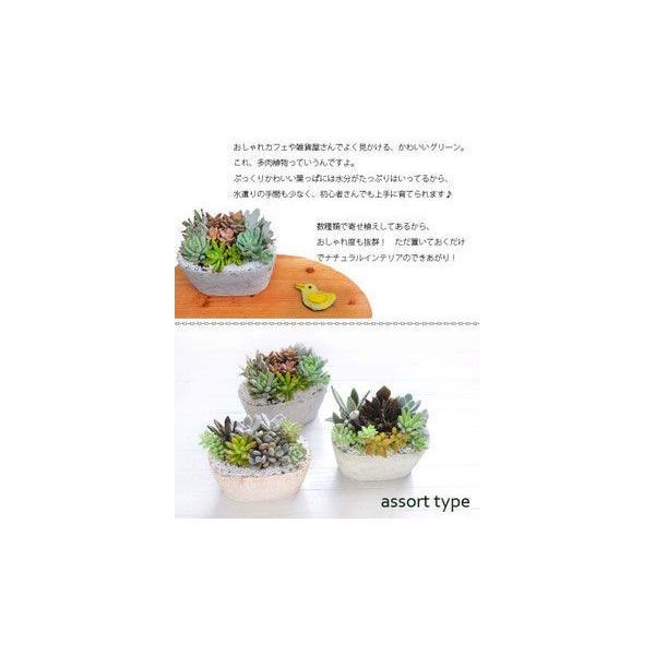 サボテン 多肉植物 寄せ植え 即日発送 fkjiyugaoka 03