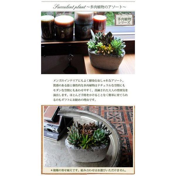 サボテン 多肉植物 寄せ植え 即日発送 fkjiyugaoka 04