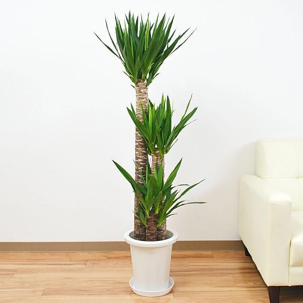 寒さに強い観葉植物