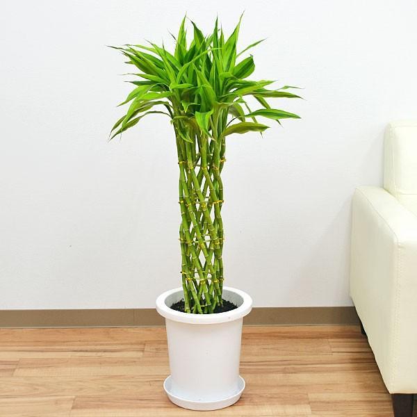 知らなきゃ損! 【運気別】縁起物の植物の選び方ガイド