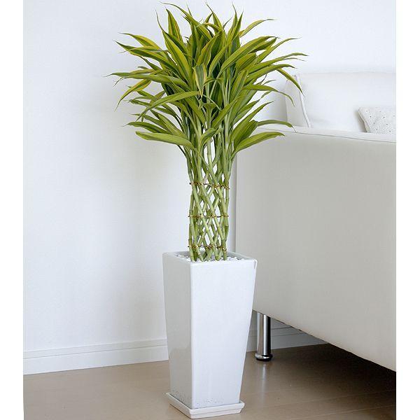 ギフトによく利用される観葉植物