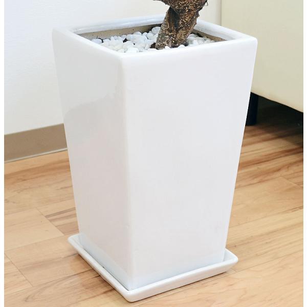 観葉植物 ガジュマル(多幸の木) 曲がり仕立て スクエア陶器鉢植え|flower-c|05