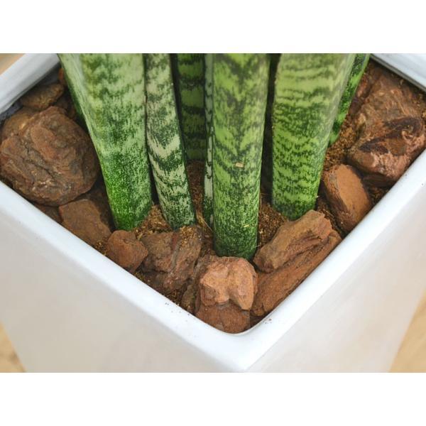 観葉植物 サンスベリア・ゼラニカ ロングスクエア陶器鉢植え BIGサイズ|flower-c|04