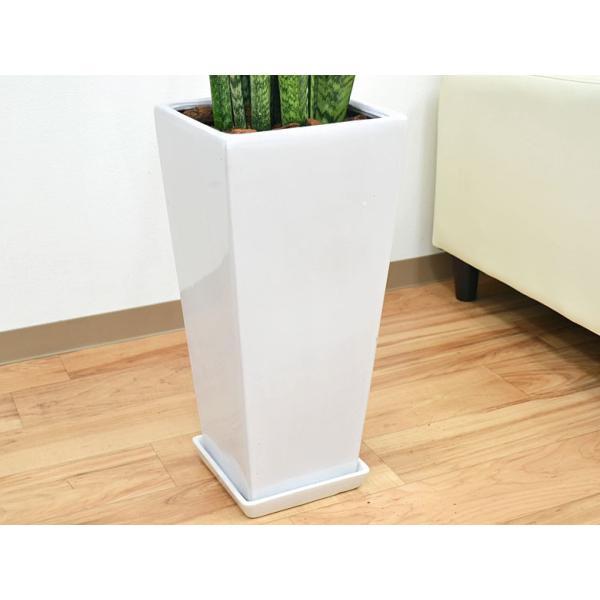 観葉植物 サンスベリア・ゼラニカ ロングスクエア陶器鉢植え BIGサイズ|flower-c|05