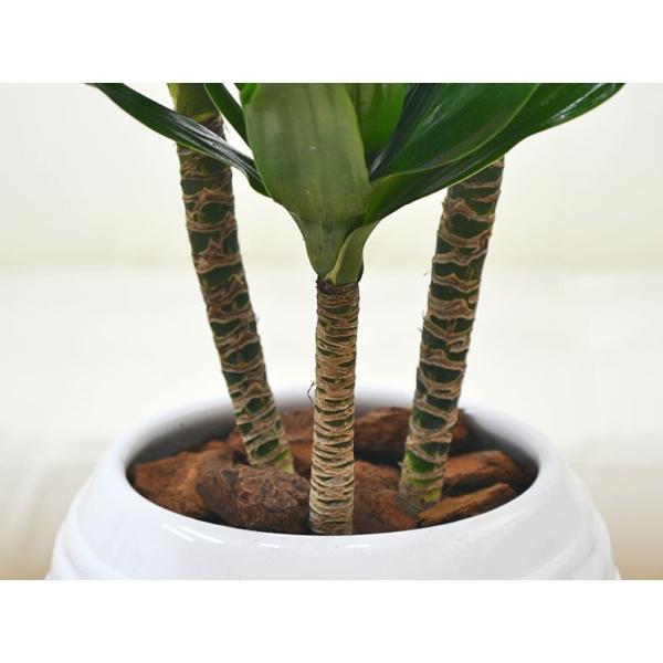 観葉植物 ドラセナ・コンパクター ボール型陶器鉢植え 5号|flower-c|03