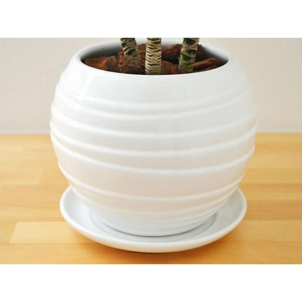 観葉植物 ドラセナ・コンパクター ボール型陶器鉢植え 5号|flower-c|04
