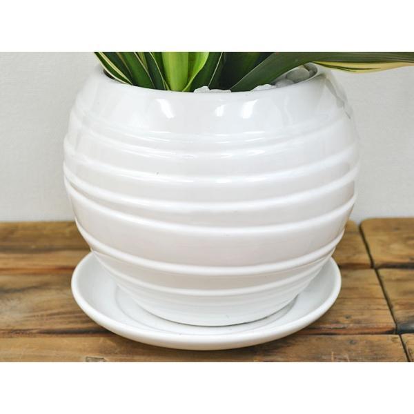 観葉植物 万年青(オモト) 甲竜 ボール型陶器鉢植え|flower-c|04
