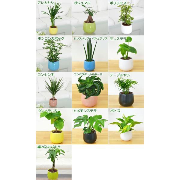 観葉植物ミニ ハイドロカルチャー 3鉢セット おしゃれ お祝い 陶器鉢付き|flower-c|02