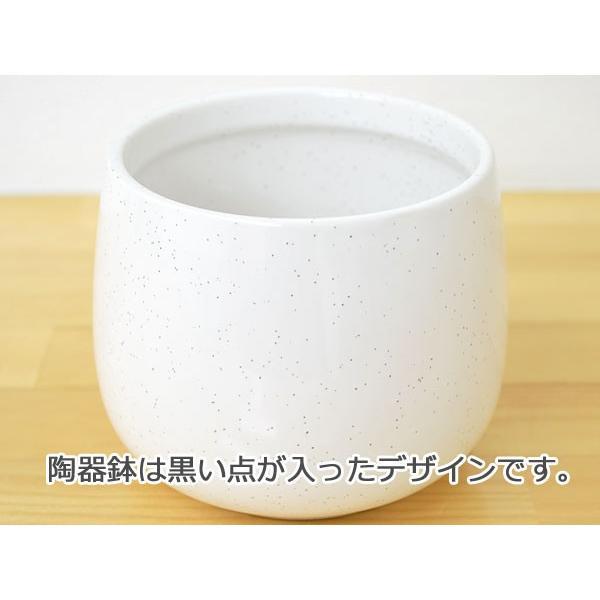 観葉植物ミニ ハイドロカルチャー 3鉢セット おしゃれ お祝い 陶器鉢付き|flower-c|04