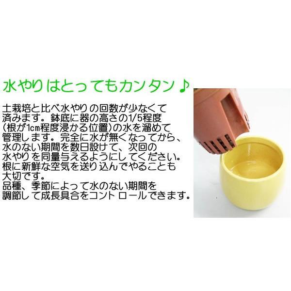 観葉植物ミニ ハイドロカルチャー 3鉢セット おしゃれ お祝い 陶器鉢付き|flower-c|08